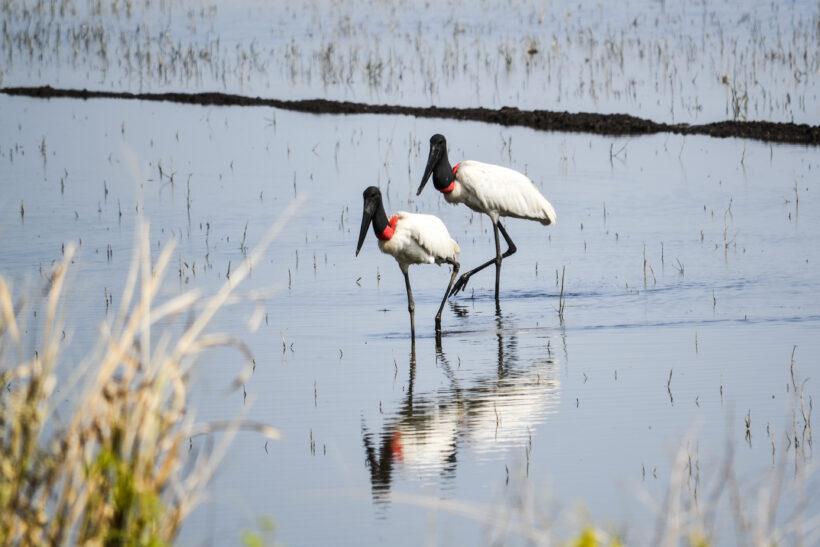 Birdwatching Argentina 1