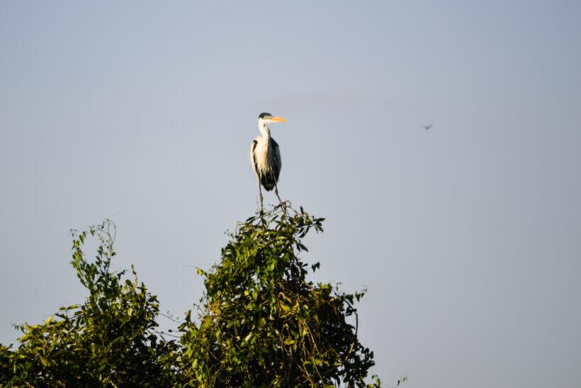 Birdwatching Argentina 3