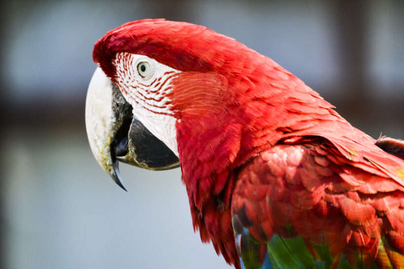 Birdwatching Argentina 6