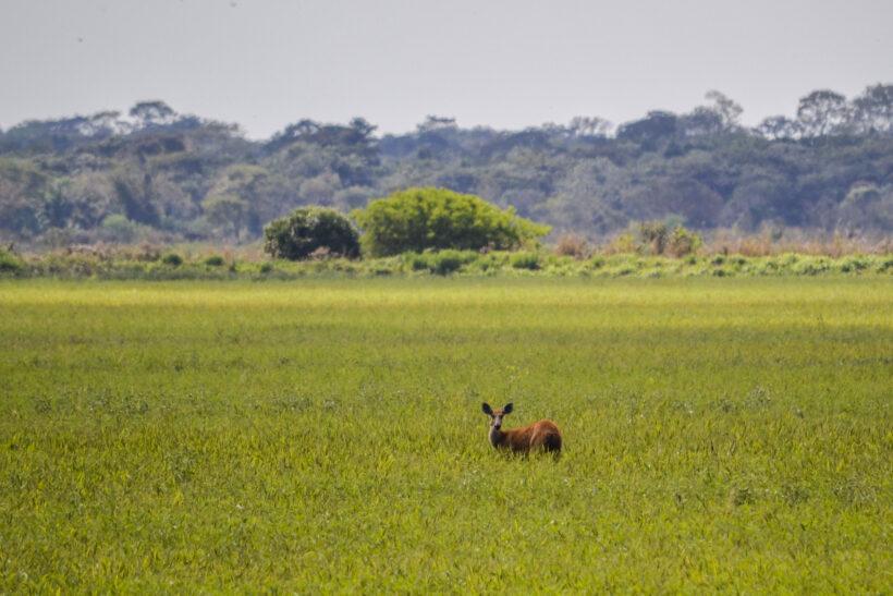 Wetlands Argentina Ibera