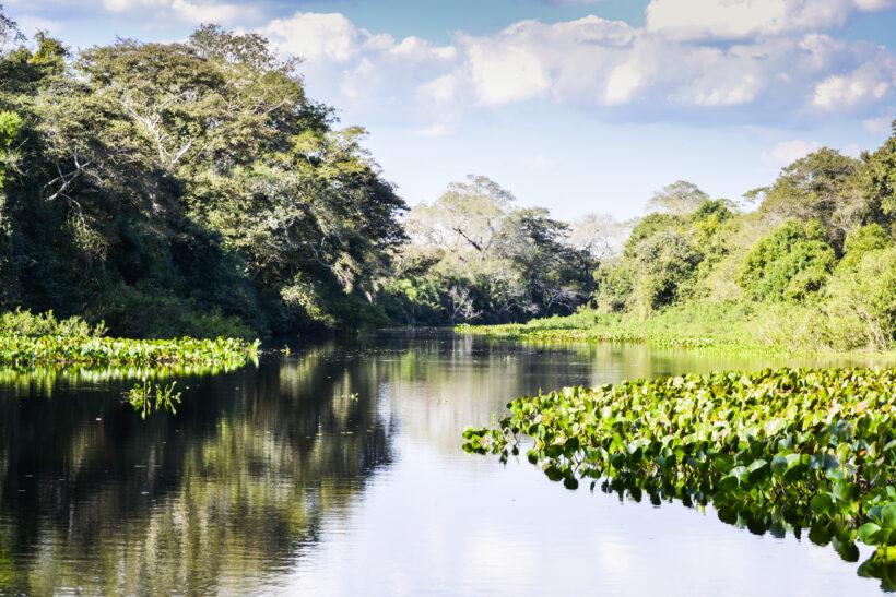Wetlands Argentina 2